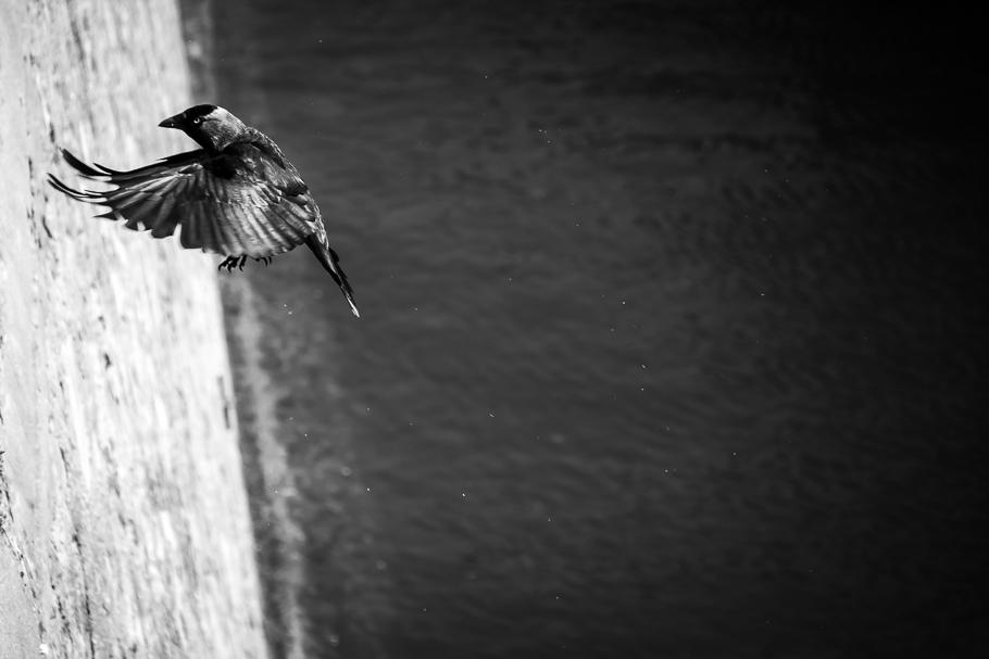 'Traigo oscuridad' de Carlos Larios