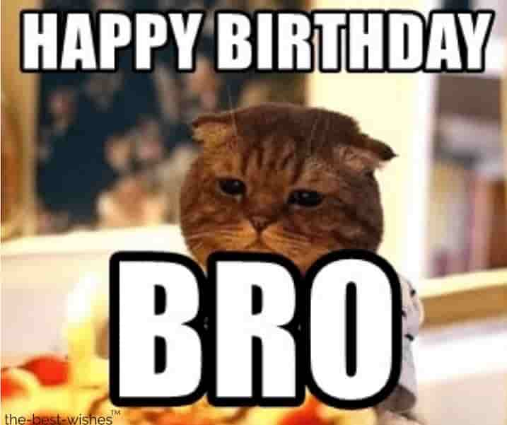 cat memes for bro birthday
