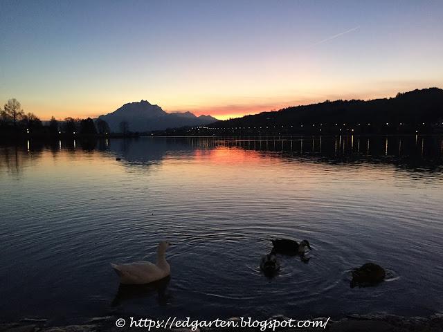 Entengruppe bei Sonnenuntergang
