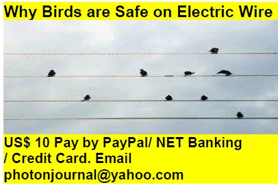 Why Birds are Safe on Electric Wire bird story book
