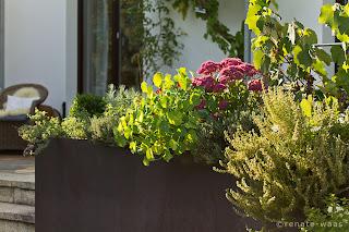 Corten - Corten-Stahl als Pflanztrog für Stauden, Kräuter, Lavendel, Bux und Einjährign Blumen
