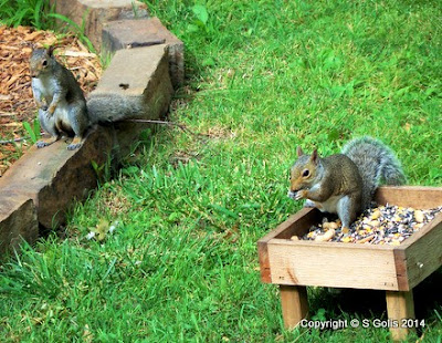 Yard and garden secrets keep squirrels out of bird feeders how to for How to keep squirrels out of my garden