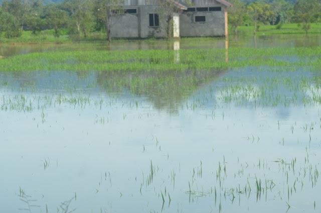 Petani Abdya Kecewa Pemkab Tak Serius Tangani Banjir