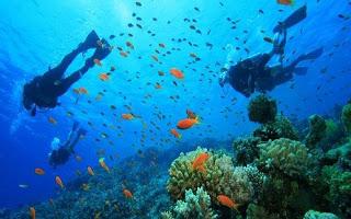 All About Bali Scuba Diving Tanjung Benoa