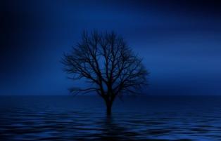foto di albero nel mare