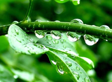 15 Khasiat Air Embun Untuk Kesehatan Dan Kecantikan