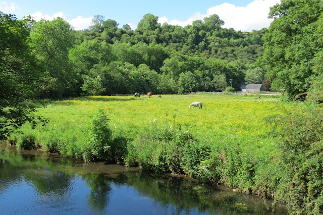 In the foreground a river - on the far side, horses grazing in a buttercup meadow surrounded by trees.
