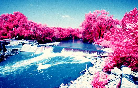Water Fall Effect Wallpaper Pink Forest Photography Effect Wallpaper Pink Wallpaper