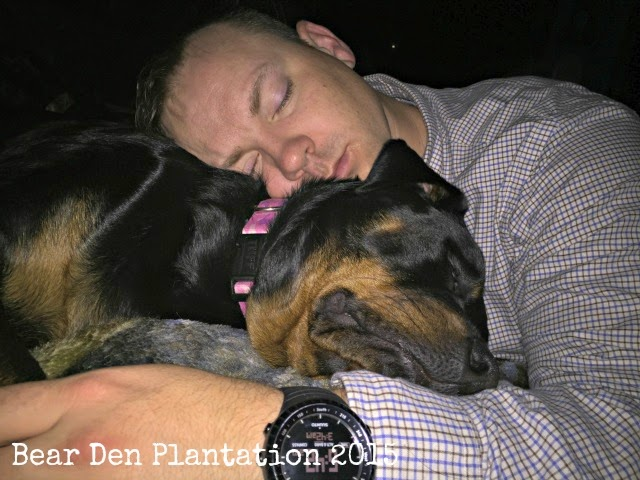 Rottweiler-human travel snuggles