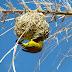 999 More Photos of Amazing Birds