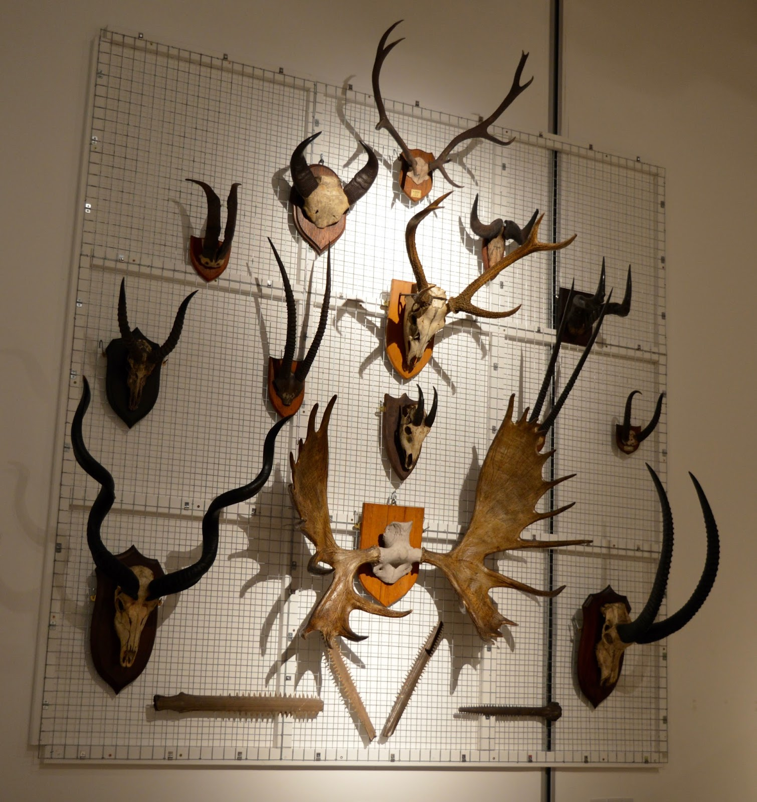 Bones Exhibition at Hancock Museum, Newcastle - wall of antlers