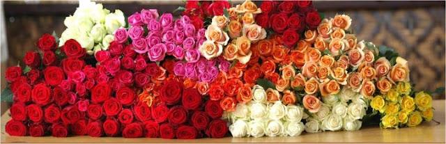 bunga mawar segar