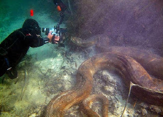 brave Swiss diver takes his chance with a giant anaconda