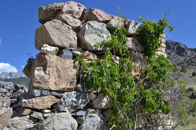 plants climbing the stone