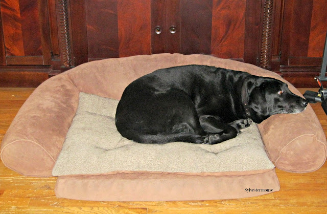 Recommended dog bed for large breed dogs.  This ortho sleeper dog couch bed is durable, comfortable, and the cover is washable.