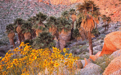 anza borrego widescreen hd wallpaper