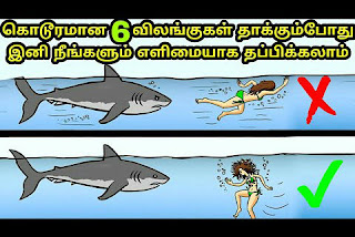 How to survive animal attack's,  Safety Tips, 6 kodiya mirugangalin thakkudhalil irundhu thappikka valigal
