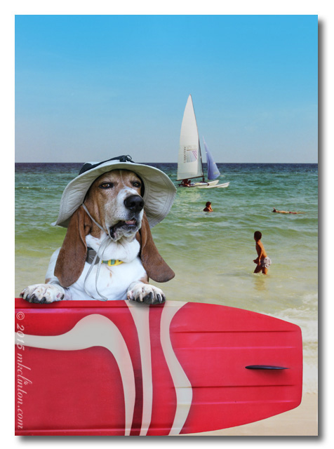 Basset at beach in hat with surfboard