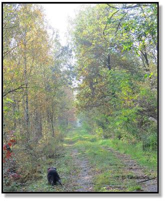 kleiner Hund im großen Wald