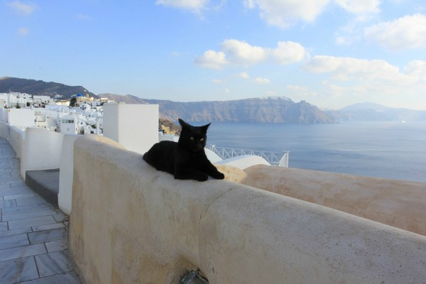 santorini black cat