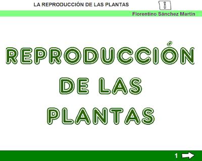 http://ceiploreto.es/sugerencias/cplosangeles.juntaextremadura.net/web/curso_3/naturales_3/reproduccion_plantas_3/reproduccion_plantas_3.html
