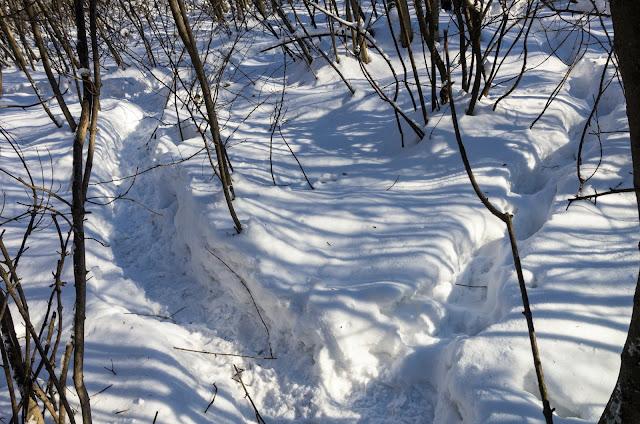 звірячі стежки у лісі
