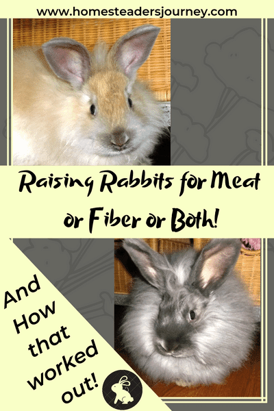Raising rabbits for meat and fiber works for some, but this is our story of trying to raise meat and then fiber rabbits on our homestead. #raisingrabbits #angorarabbits #homesteader