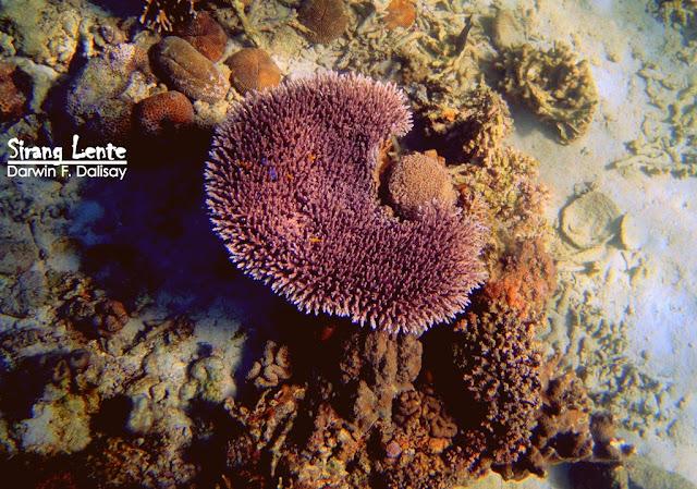 Best Underwater Camera