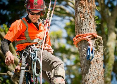 Tree Worker Job Search