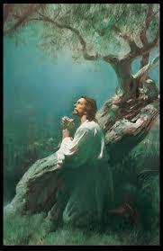 Doa Pohon Keluarga : pohon, keluarga, Harapan, Pohon, Keluarga