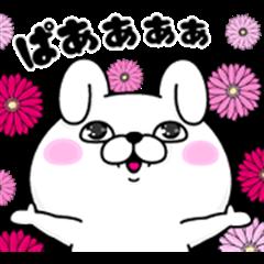 Rabbit 100% × ViS