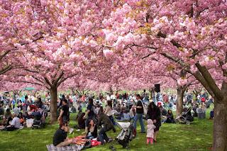 Hanami, Tradisi Jepang Sambut Mekarnya Bunga Sakura