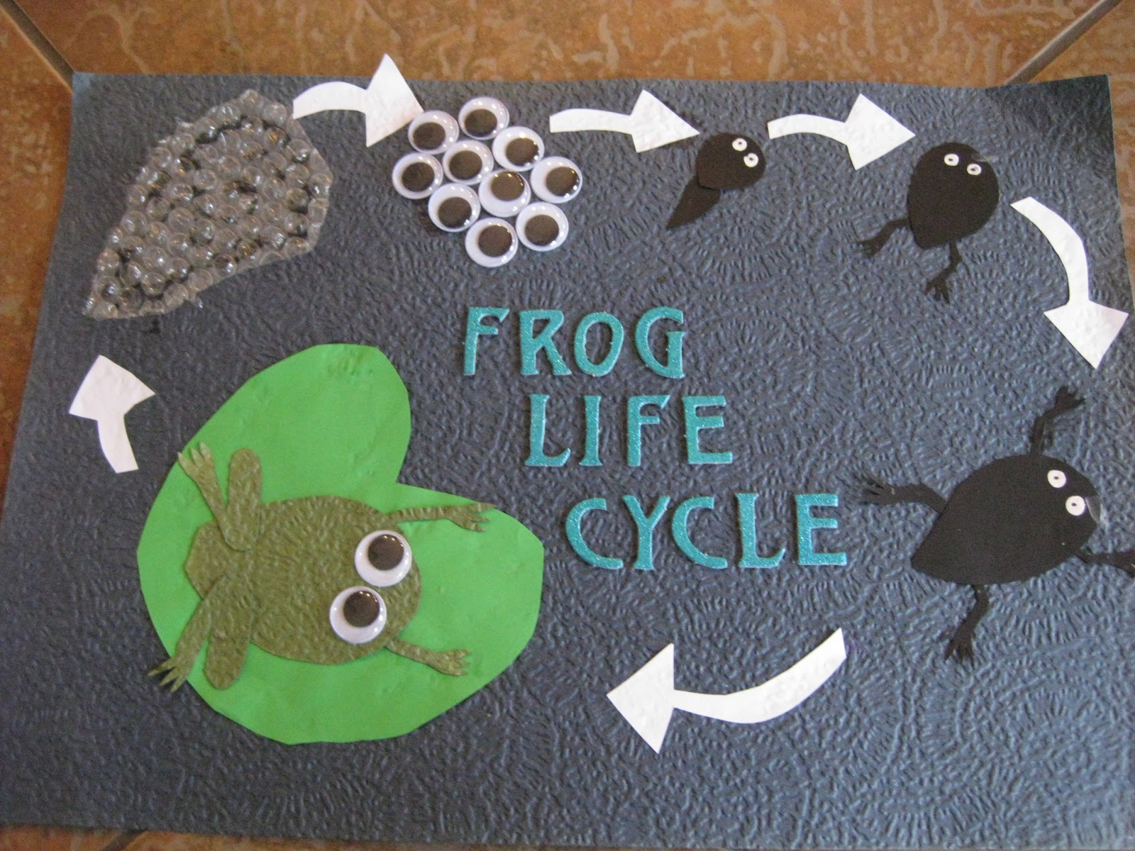 Mrs Griffin S Cool Class Frog Life Cycles