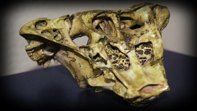 """Desmontando el """"misterioso"""" Cráneo de Rhodope"""