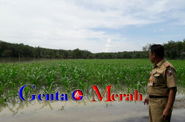 Terendam Banjir, Puluhan Hektar Lahan Pertanian Warga Lampura Terancam Poso