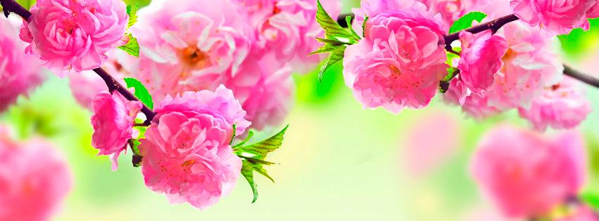 Portadas Para FaceBook Flores