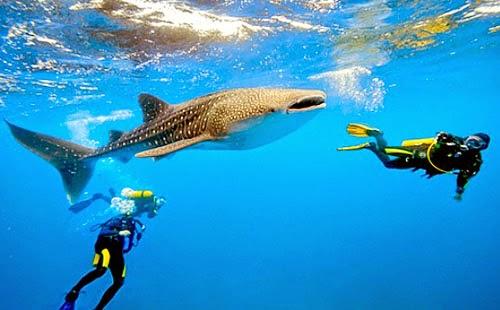 Dive Site in Cebu, Philippines