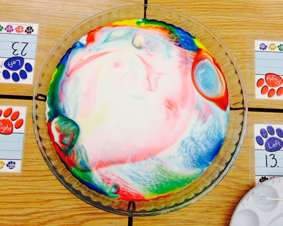 Rainbow  Milk Experiment and Little Blue and Little Yellow Book Review by Grade ONEderful