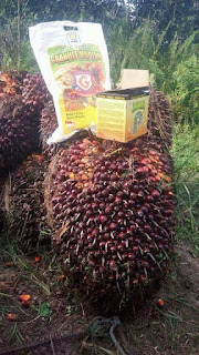 http://www.distributorpupuknasa.com/2018/04/pupuk-penyubur-kelapa-sawit.html