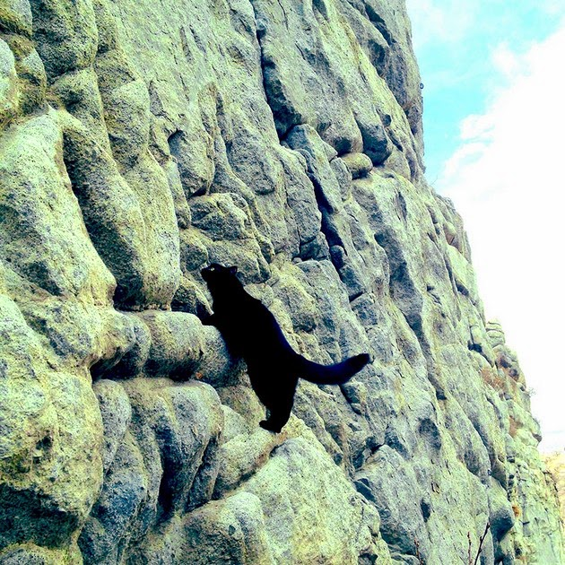 climbing cat, mountain climbing