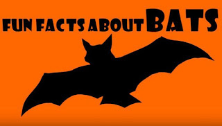 Fun Facts about Bats for Kids! Learn about Bats with this Educational Cartoon