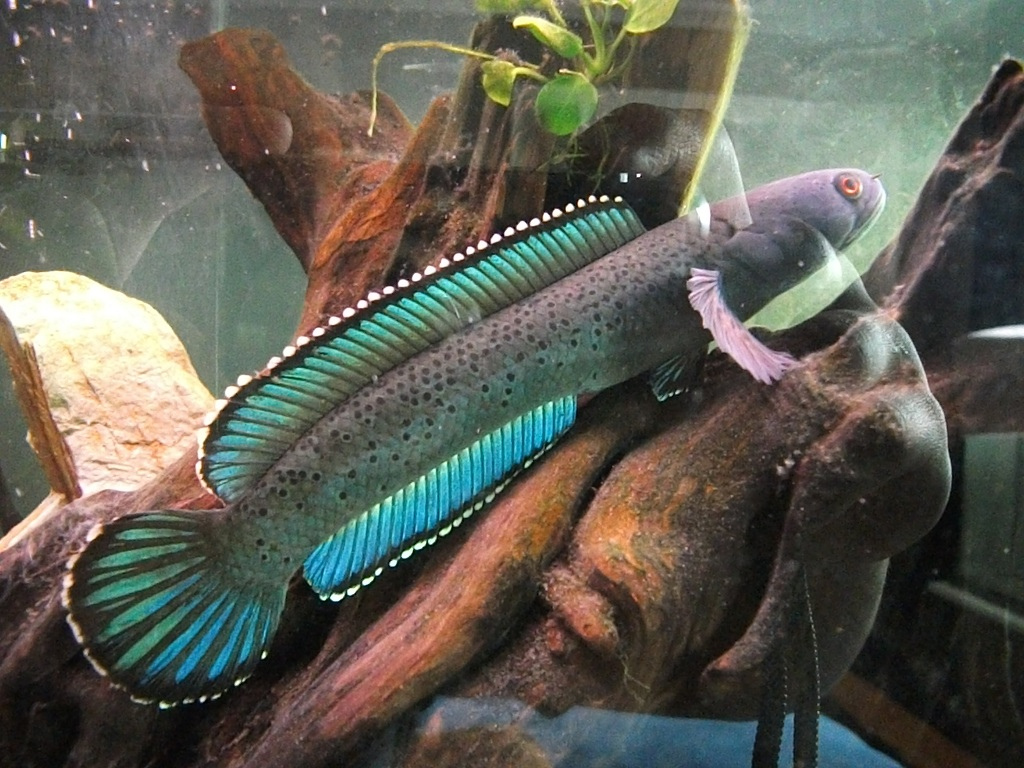 Joe S Aquaworld For Exotic Fishes Mumbai India 9833898901