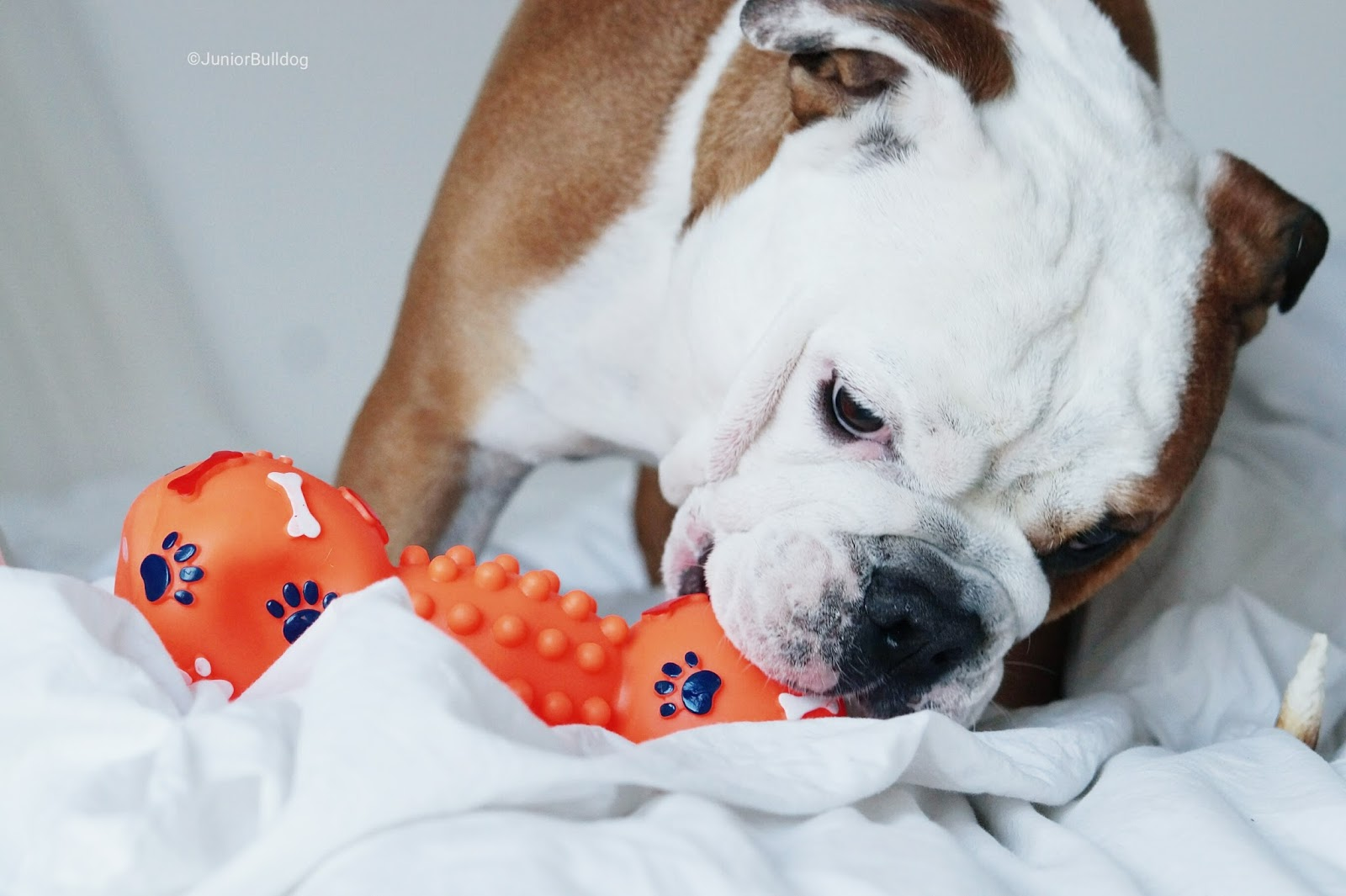 haltère idéal dog chien jouet
