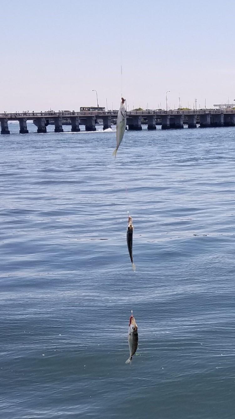 釣り場 江ノ島
