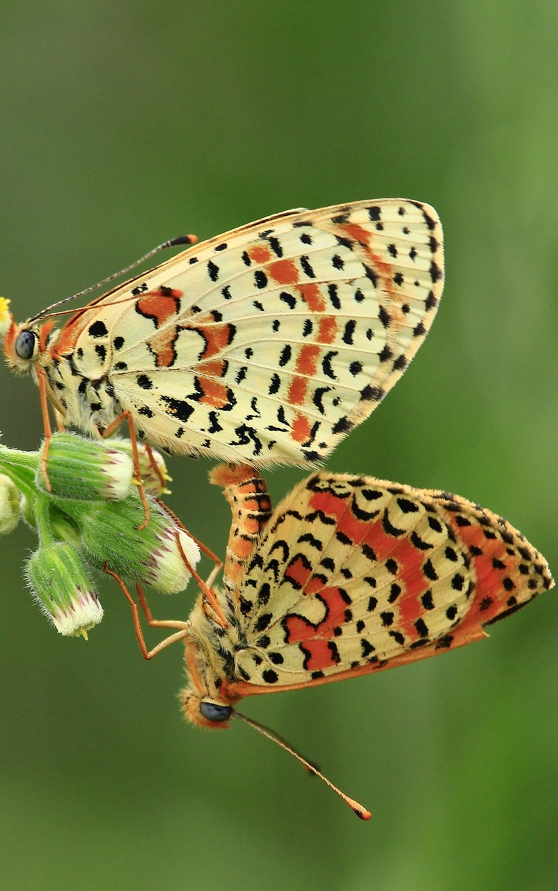 Butterflies with beautiful patterns.