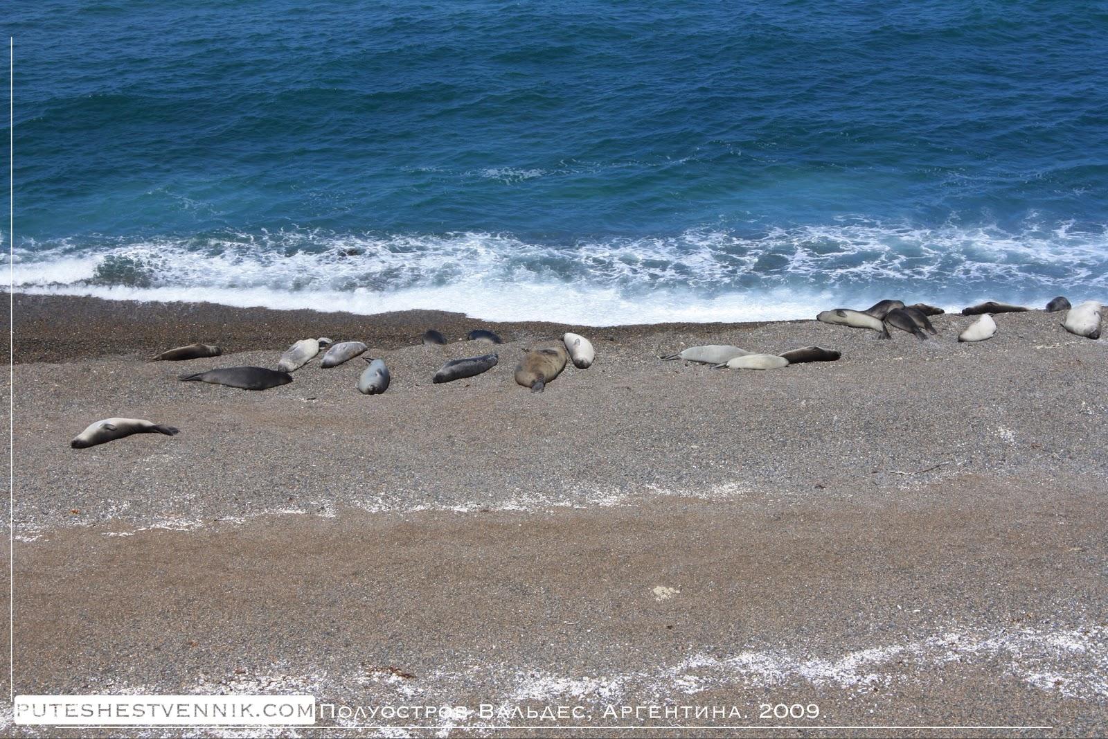 Морские млекопитающие Аргентины