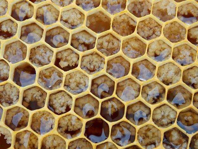 خلطة شفاء طبيعية لعلاج مرض الحرقة في البول مجربة Honeycomb