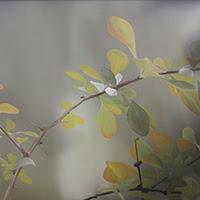 Montse Ayats pintura figurativa paisaje