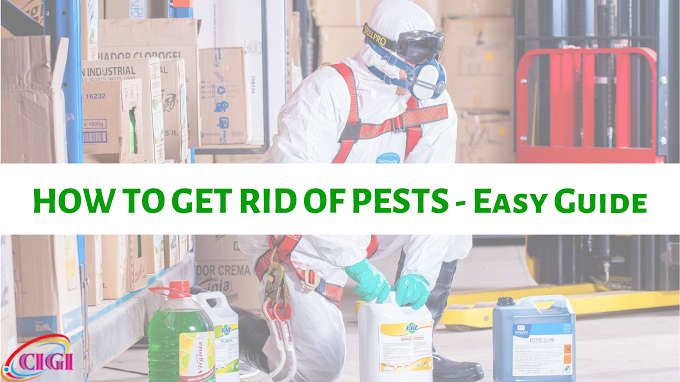 How To Get Rid Of Pests At Home - Simple Guide By CIGI Services