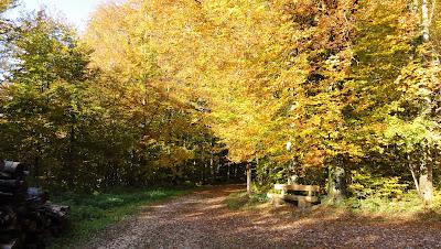 Bänkli im Herbstwald